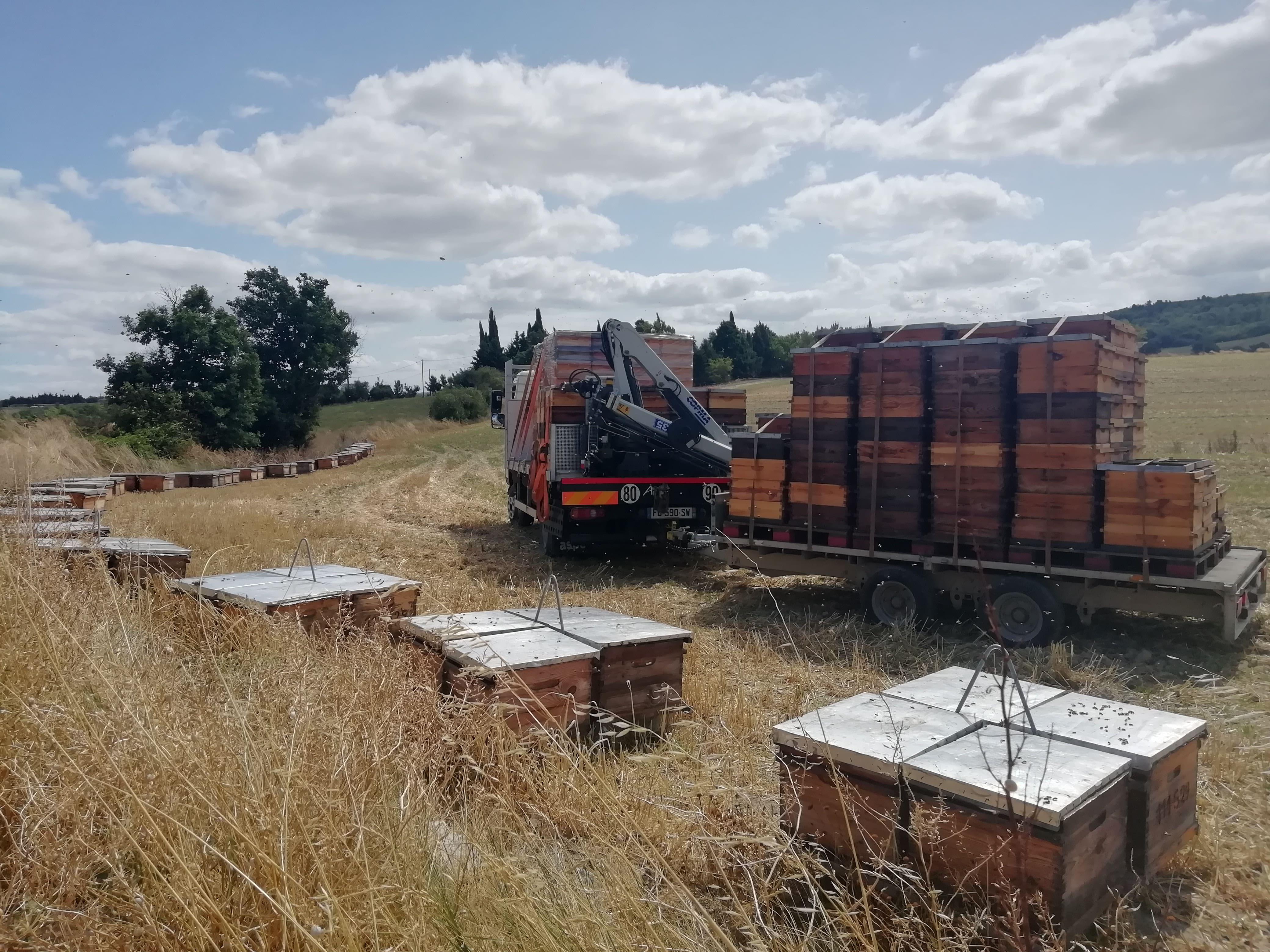 récolte miel ruchers clauzeille